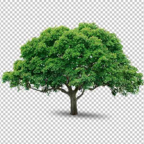 شجرة مفرغة
