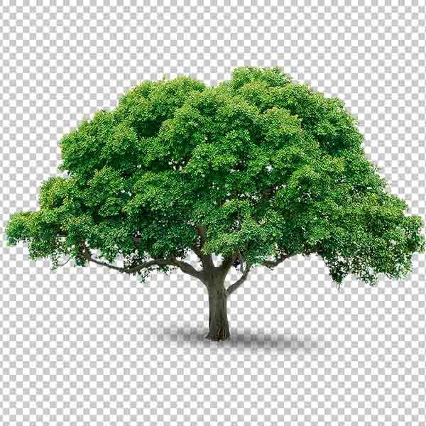 شجرة مفرغة خلفية شفافة مجانا
